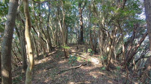 16.自然林の尾根.jpg