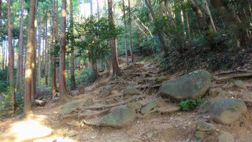 4.登山道.jpg