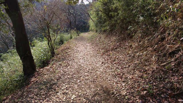 5.落ち葉の道.jpg