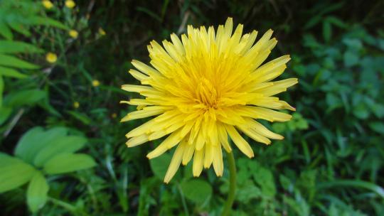 5.黄色い花4.jpg