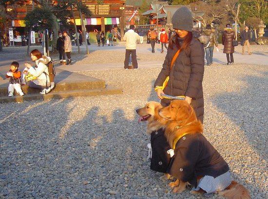 8犬の正装.jpg