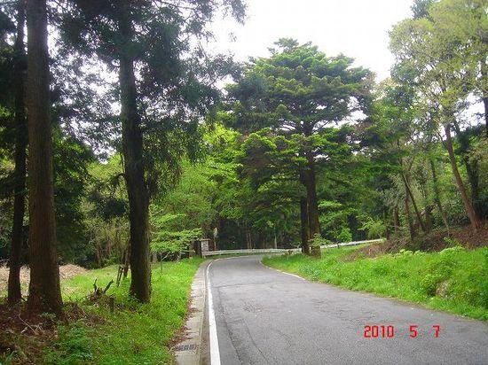 モミの木駐車場DSC03487.jpg