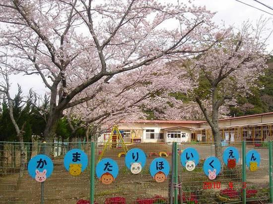 保育園の桜DSC02905.jpg
