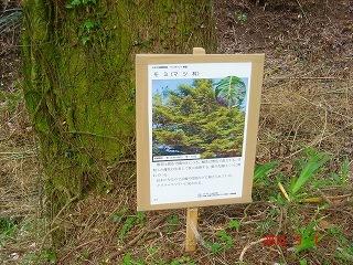 木の説明DSC03488.jpg