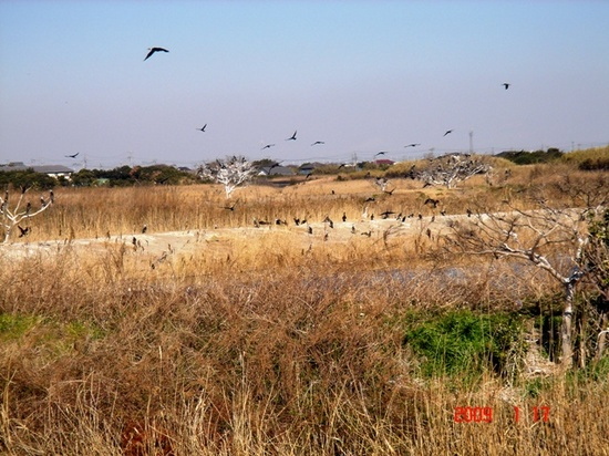 池の鳥2.JPG