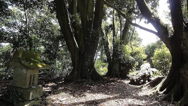 頂上の木.jpg
