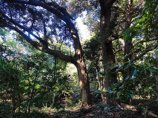 5.巨木.jpg