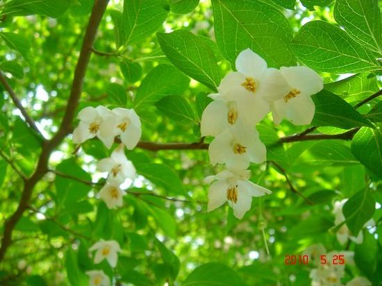 5.白い花びらDSC03601.jpg