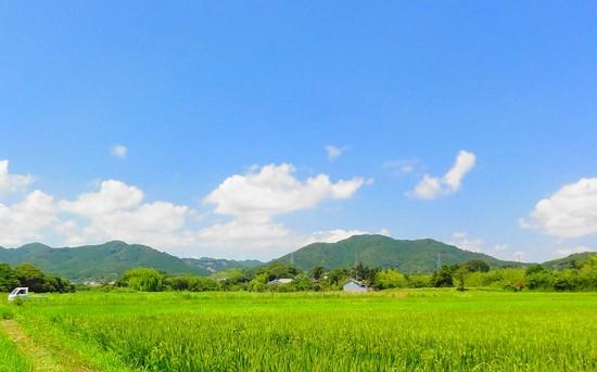 7181夏の田.jpg