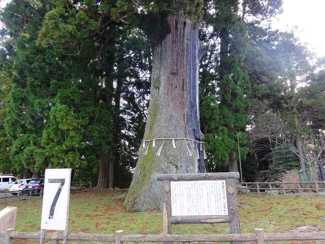 9.千年杉.jpg