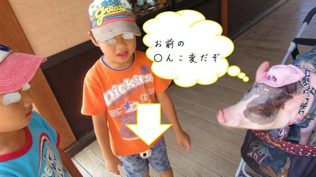 モモちゃんの私的.jpg